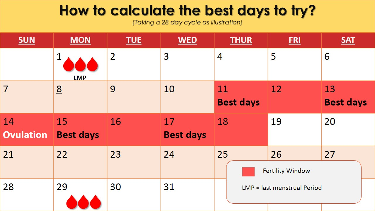 calculate-the-best-days-for-trying-to-conceive